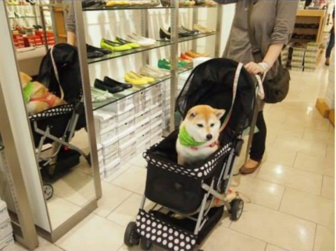 doge8.png