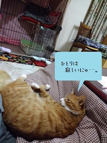 フルお引越3日目3