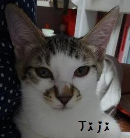 ジャスミン(ジジ)