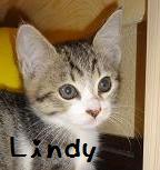 ポピー(リンディ)