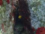 幸せの黄色いサイコロ♪