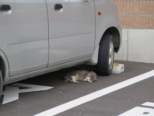 栃木 眠り猫