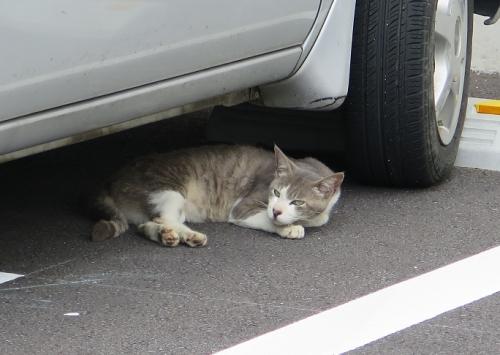 栃木 起き猫