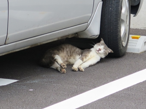 栃木 伸び猫