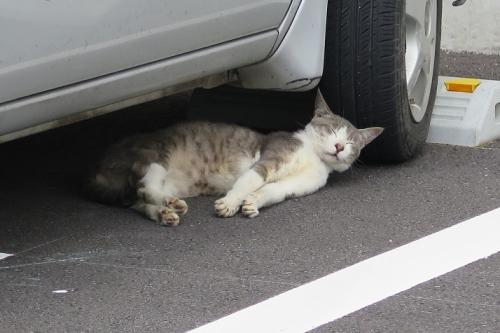 栃木 可愛猫