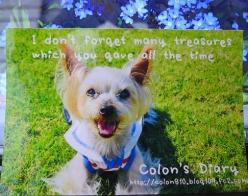 colonちゃん