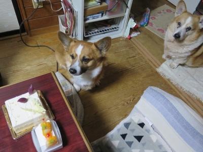 わんことケーキ