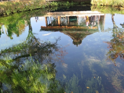 忍野八海 湧池