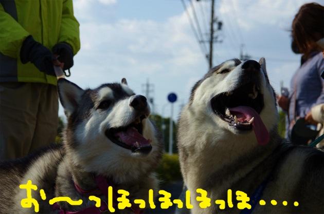 BAAA0637.jpg