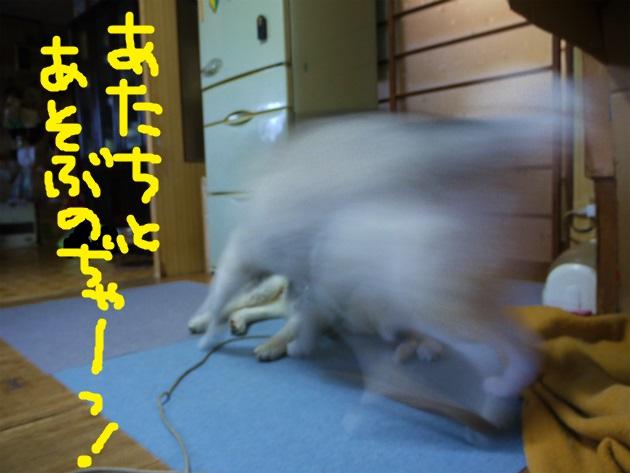 P1850633.jpg