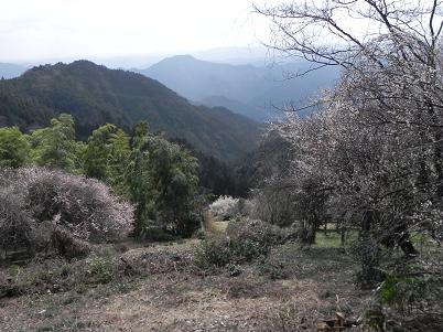 伊豆ヶ岳方面
