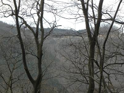 金毘羅尾根付近の林道