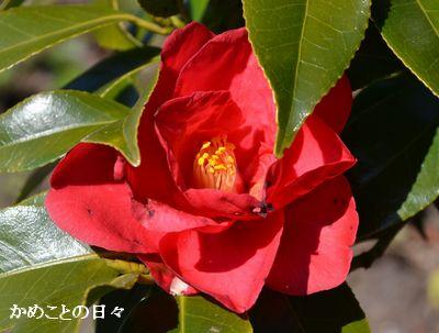 DSC_0011-2.jpg