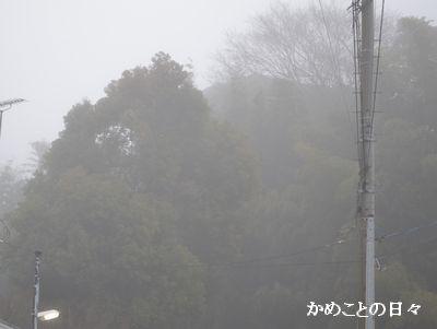 DSC_0569-2.jpg