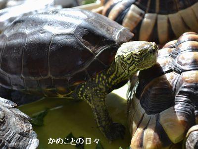 DSC_0584-suke.jpg