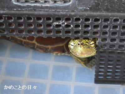 DSC_0719-s.jpg