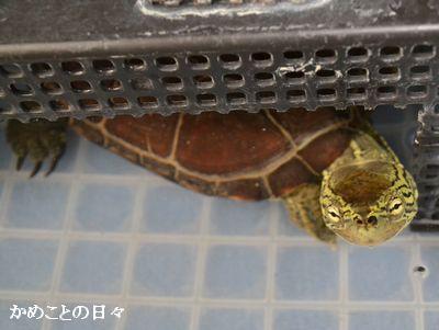 DSC_0847-suke.jpg