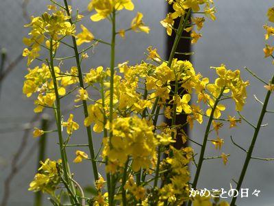 DSC_0998-n.jpg