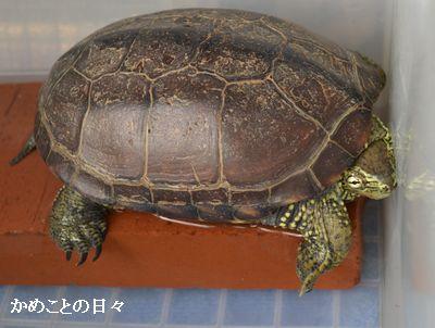 DSC_1029-suke1.jpg