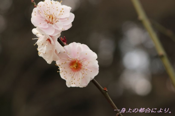 IMG_1061宮沢湖4