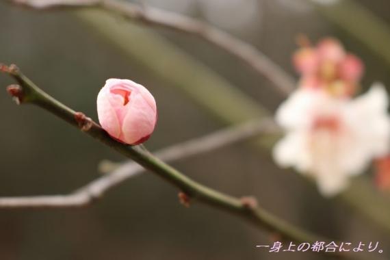 IMG_1062宮沢湖5