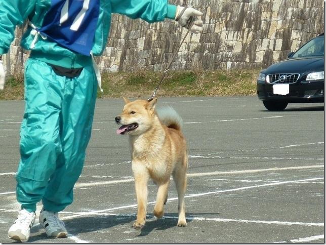 20160228NKC三重親睦展03-09