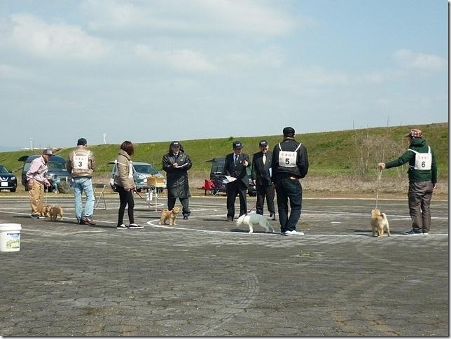 20160320NKC岐阜CH展03-05