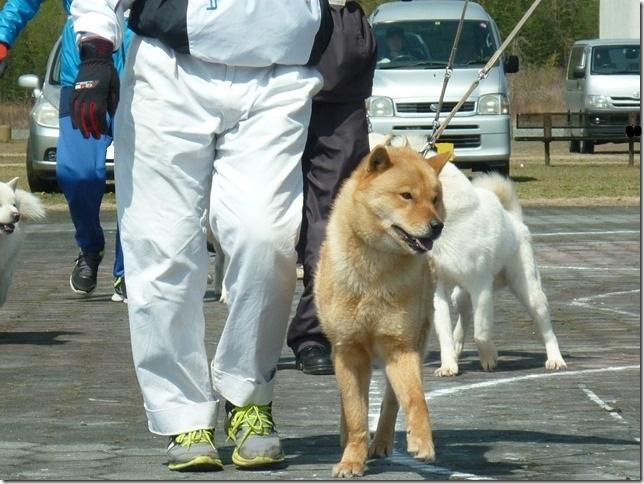 20160320NKC岐阜CH展04-15