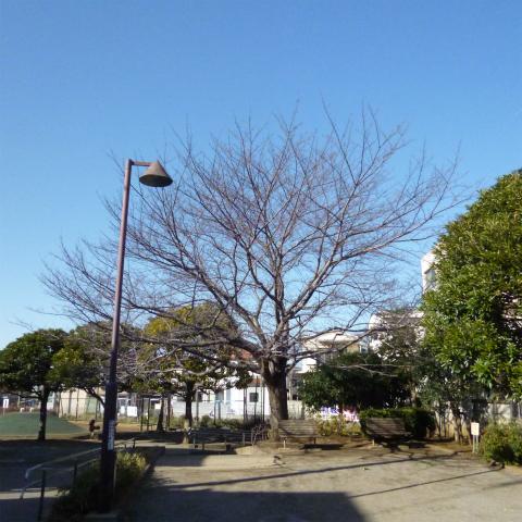 20160301桜s480