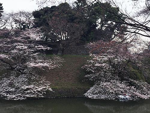 160328_chidorigafuchi.jpg