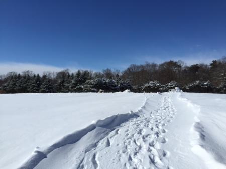 雪0119⑥_convert_20160119160129