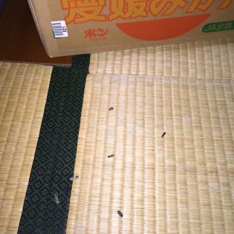 義母の家の汚部屋からネズミのフンが・・・ 004