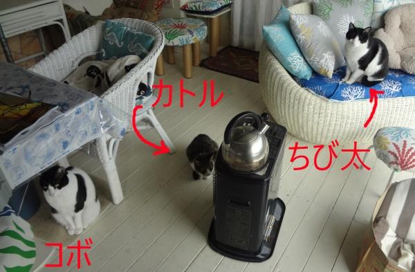 DSC09875.jpg
