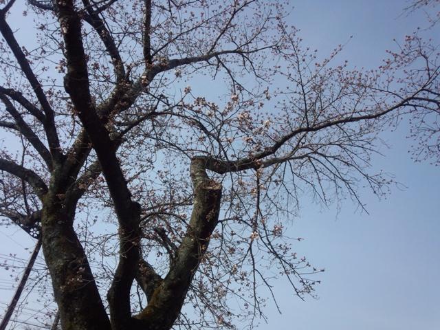 木全体0403