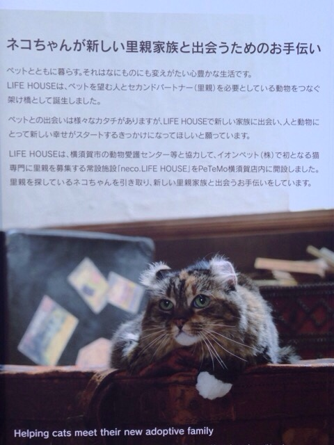 fc2blog_2016010916124900c.jpg