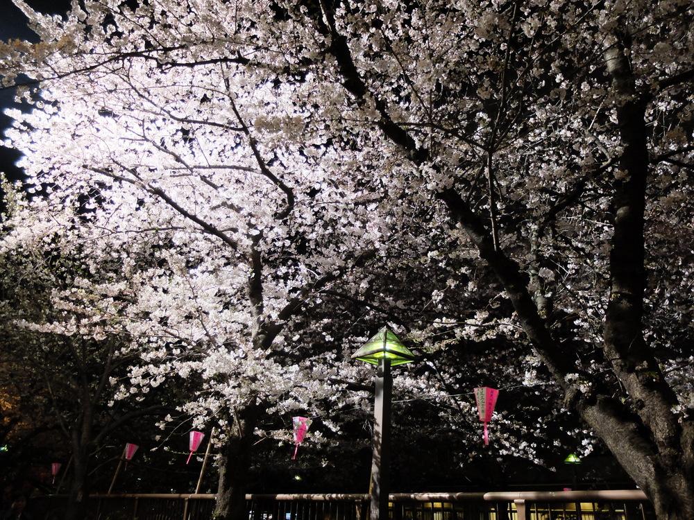 目黒川夜桜01