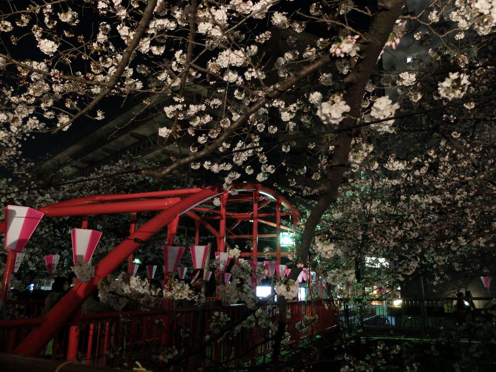 目黒川夜桜03