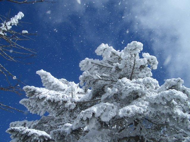 風に雪が舞う