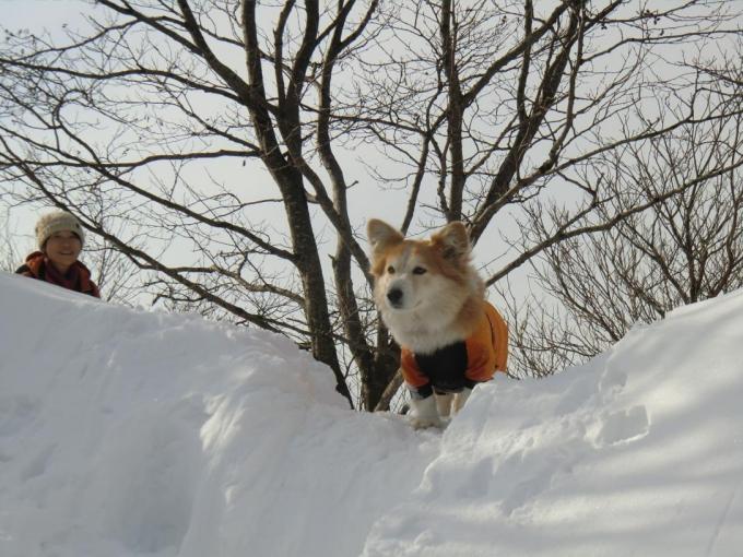 雪庇とさくら