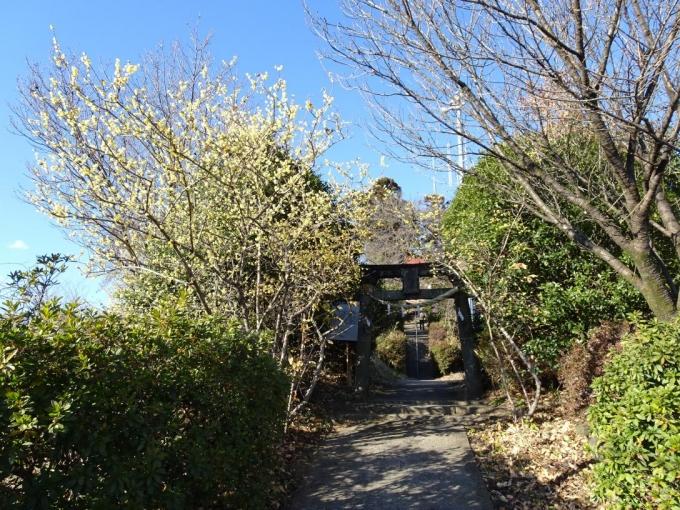 大山祇神社への参道