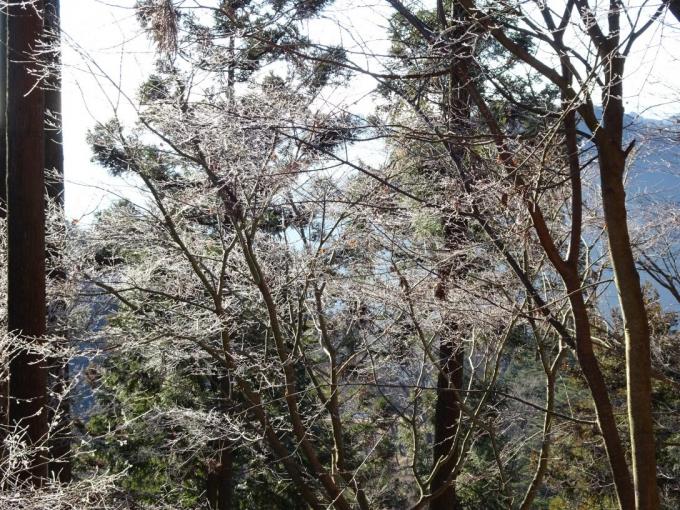 御岳神社で霧氷
