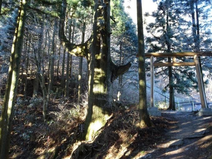 天狗の腰かけ杉、奥之院へ