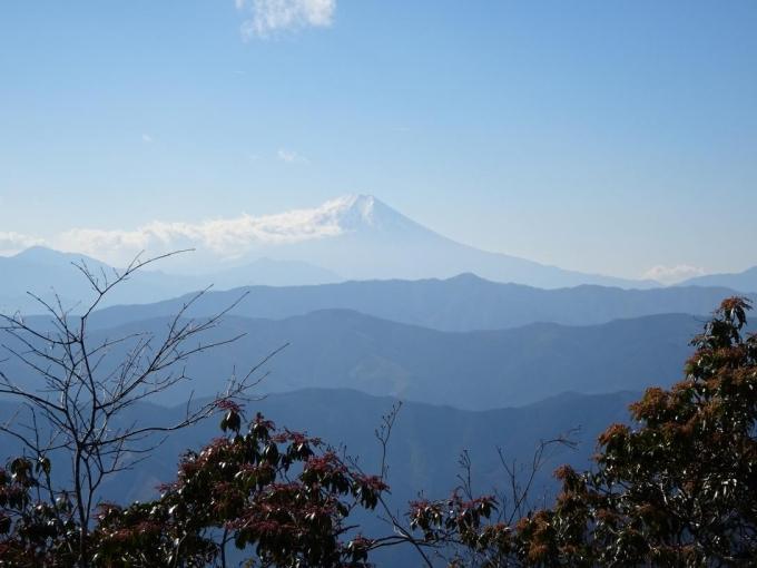 馬酔木と富士山
