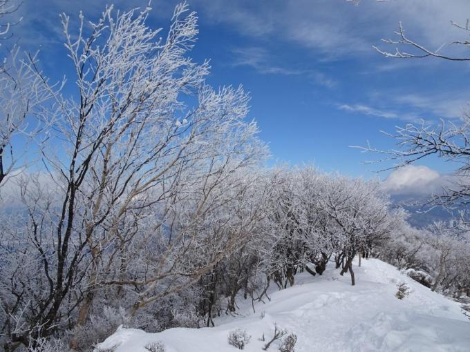 霧氷の森2
