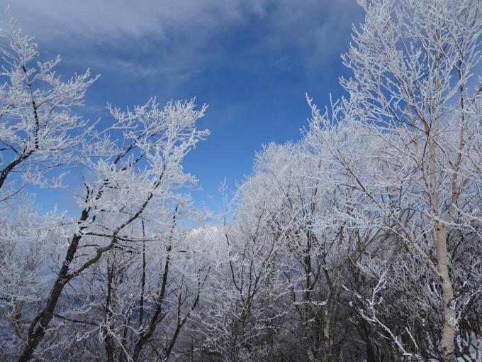 霧氷の森5