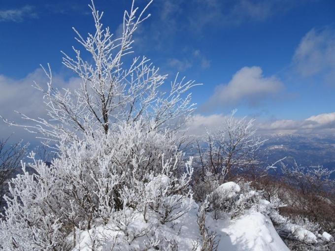 展望台の霧氷2