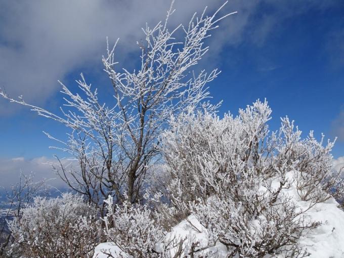 展望台の霧氷3