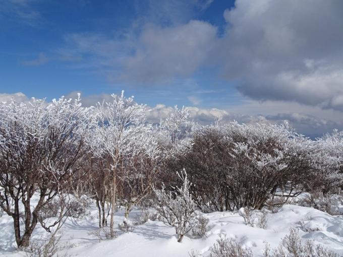 展望台の霧氷4