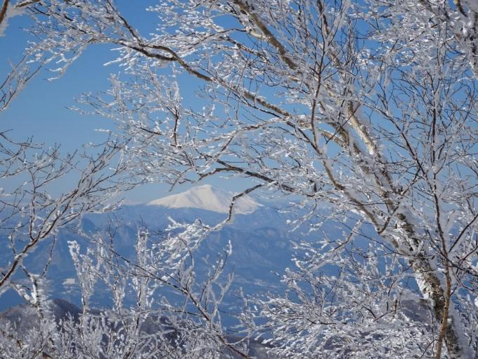 樹間から浅間山
