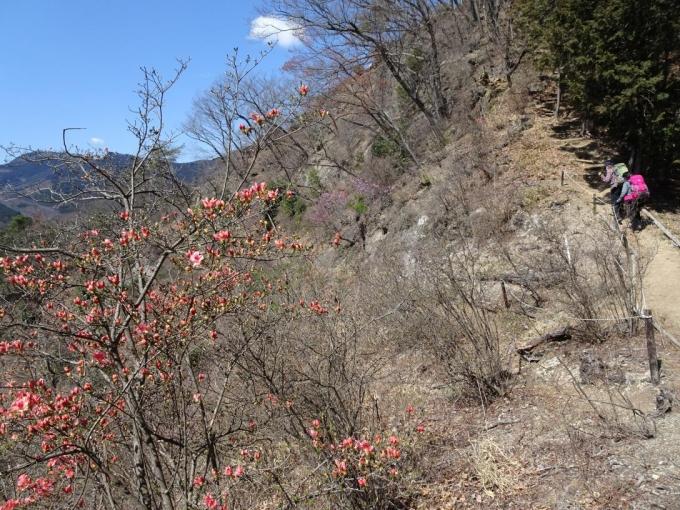 ヤマツツジが咲いてるところに